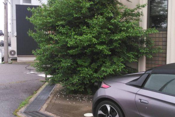 2021/6/9(水) 庭木の剪定